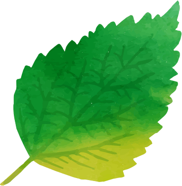 A watercolor of a green leaf
